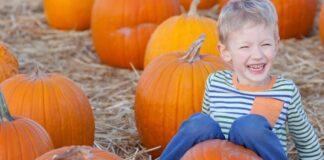 pumpkin picking half term
